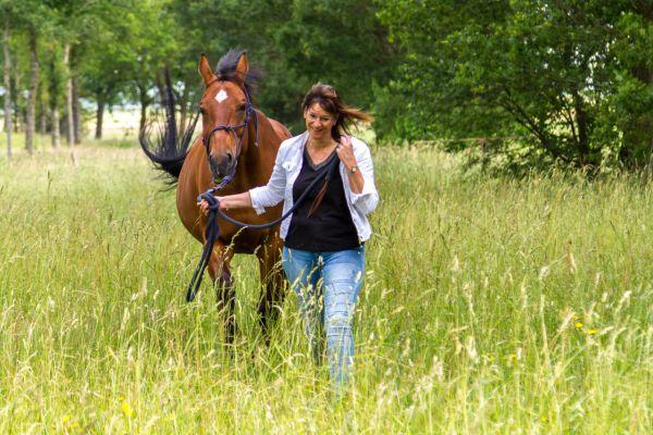 paarden-2-aangepast50548EB0-F997-448E-875F-C7A66C5C0FAB.jpg