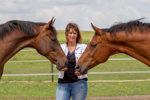 paarden-3-aangepastB992AEA5-C841-9D3B-C5F0-759CA50FF990.jpg