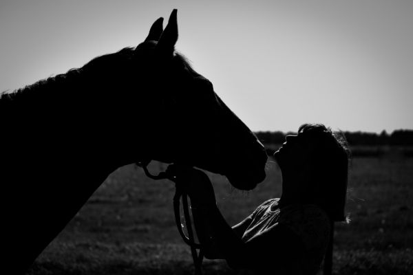 paarden-4-aangepastAE33EB94-3471-7B92-C33F-9F0BFA31FF7A.jpg